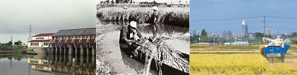 栗ノ木排水機場/写真中:昔の農作業の様子/現在の稲刈り風景
