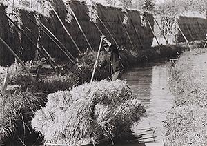 舟で稲を運ぶ少年