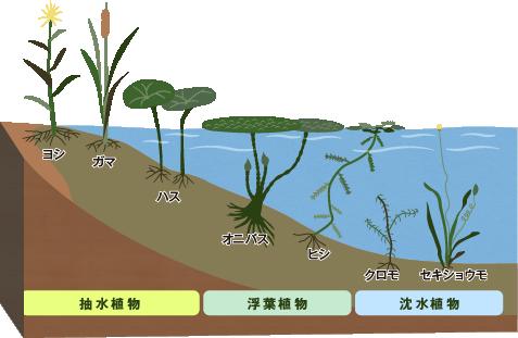 image_seitai1