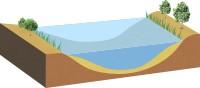 水辺の湿性林とヨシ群落がある程度で抽水生物もほとんど見られません。