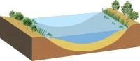堆積が進んで、抽水植物、浮葉植物、沈水植物などが進出するようになります。